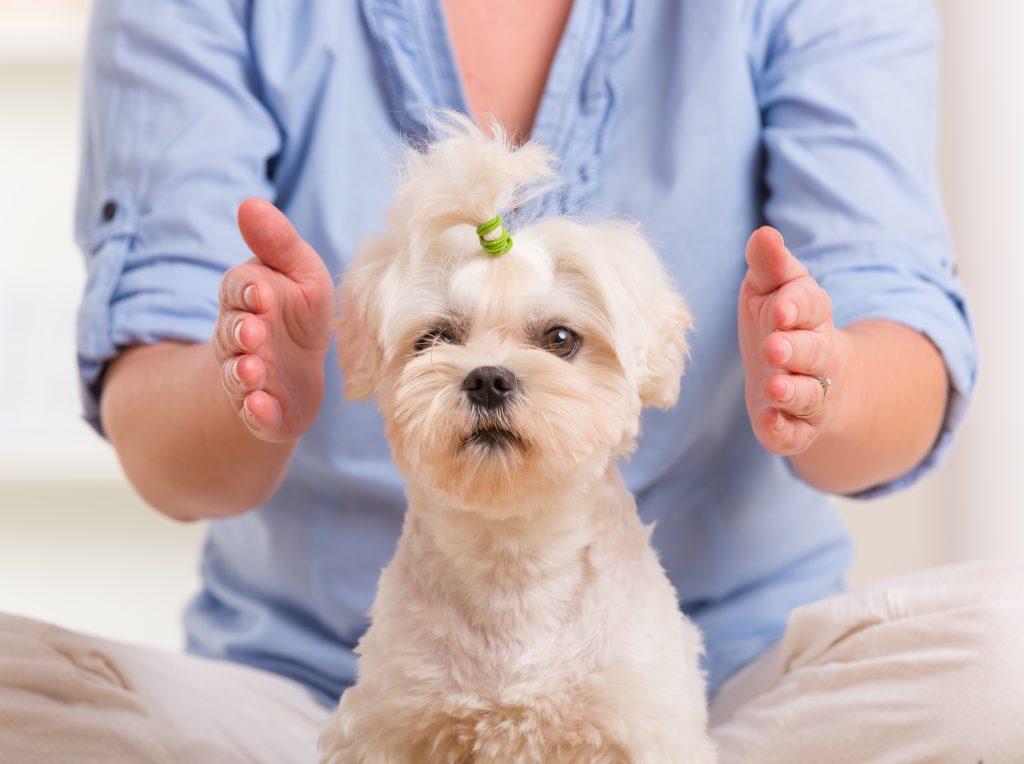 Reiki for pets Innergy Haling Arts